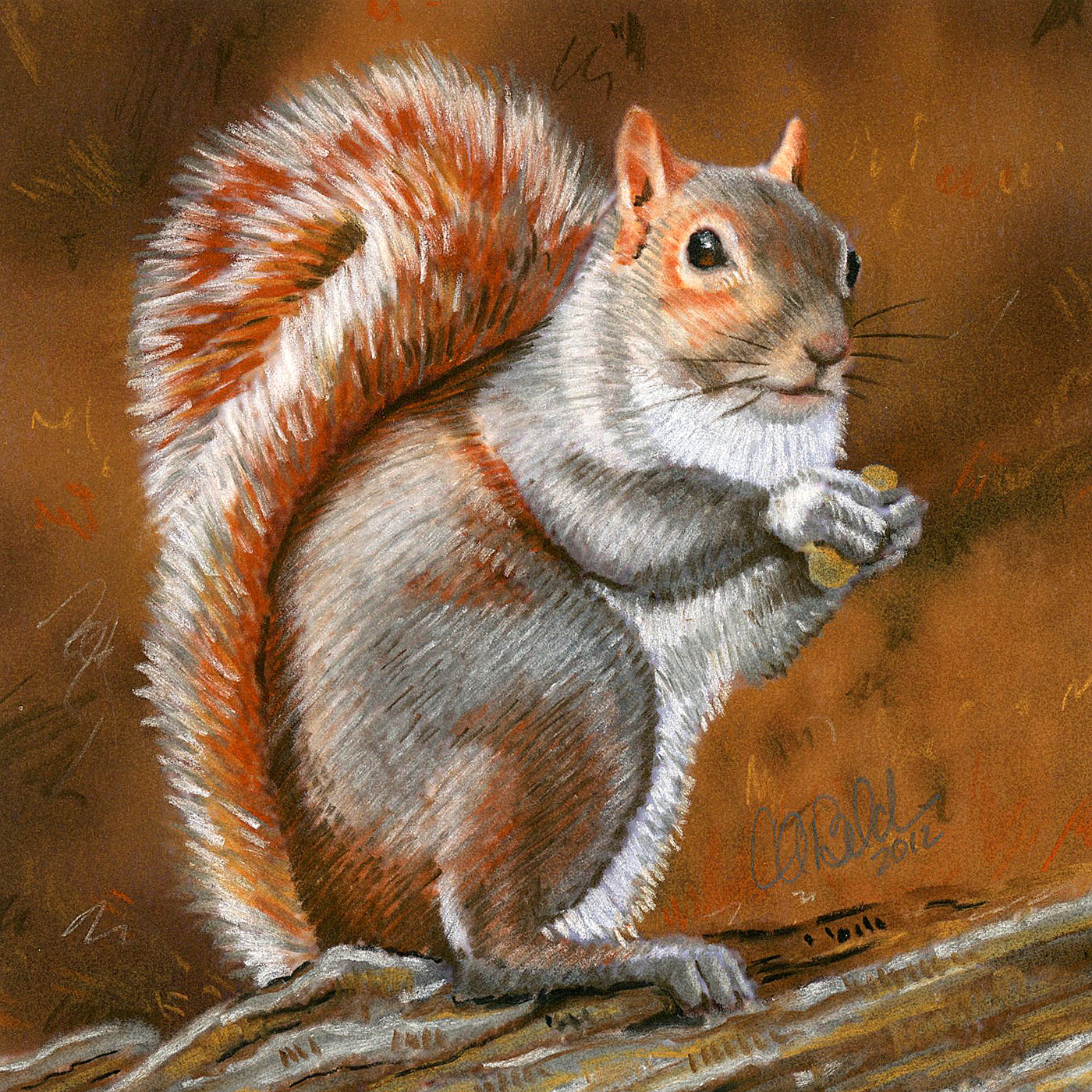 Drawn squirrel red squirrel Framed Red Squirrel Archival of