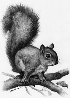 Drawn rodent artwork Squirrel A drawing art signed