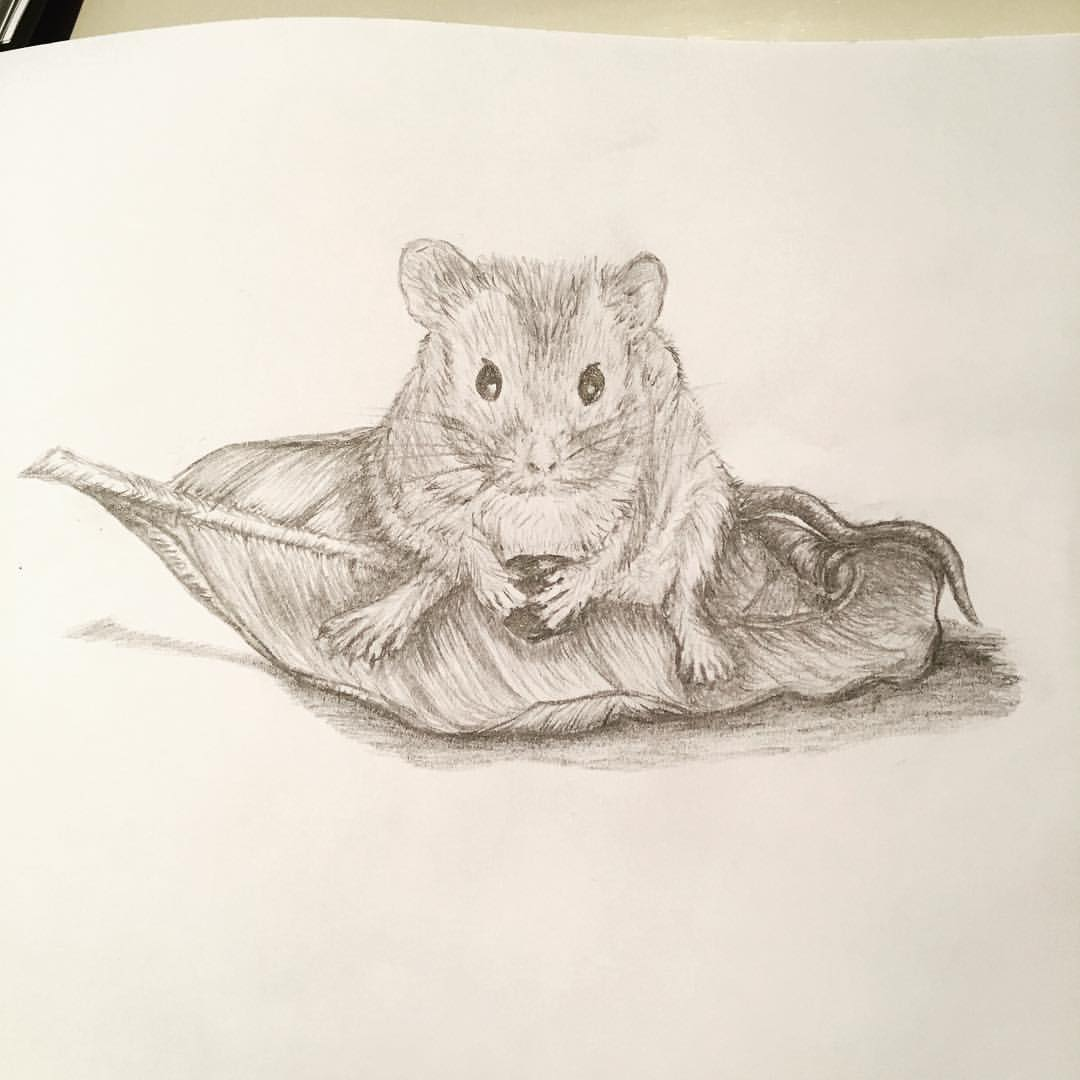 Drawn rodent artwork On Mouse #pencildrawing leaf a