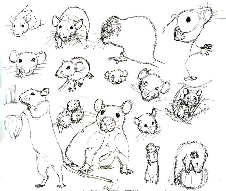 Drawn rodent awesome This on Rats mice and