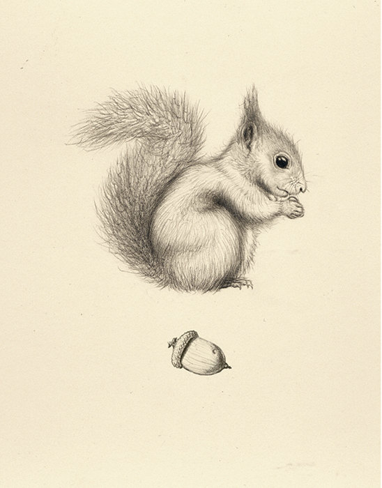Drawn rodent awesome Squirrel 36 Drawings Acorn Squirrel