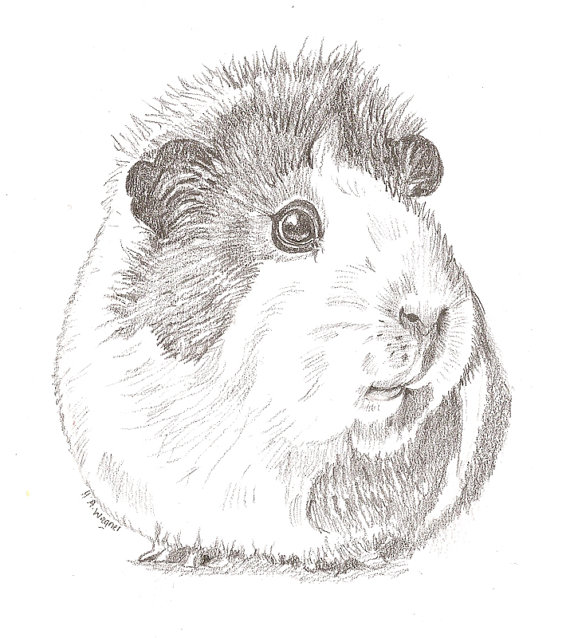 Drawn rodent awesome Pig drawing/pet Pig cute realistic