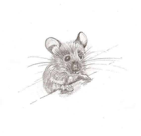 Drawn rodent awesome For Mouse animal illustration Jo