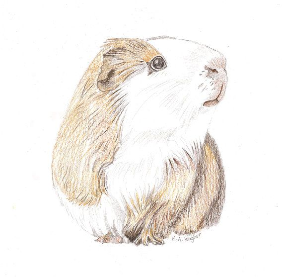 Drawn rodent awesome Pig's pencil 61 best cute