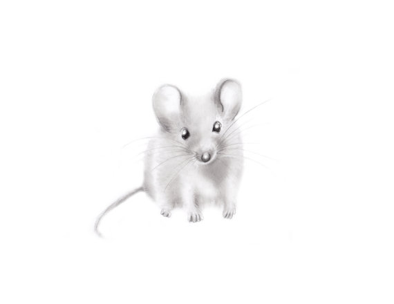 Drawn rodent baby mouse  Gender by Sketch studioQgallery