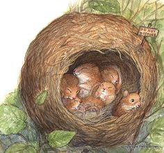 Drawn rodent baby mouse Brown Pinteres… Petra this Find