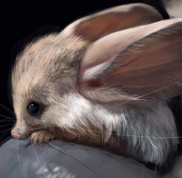 Drawn rodent big ear Pinterest Eared Long EaRs (animals)