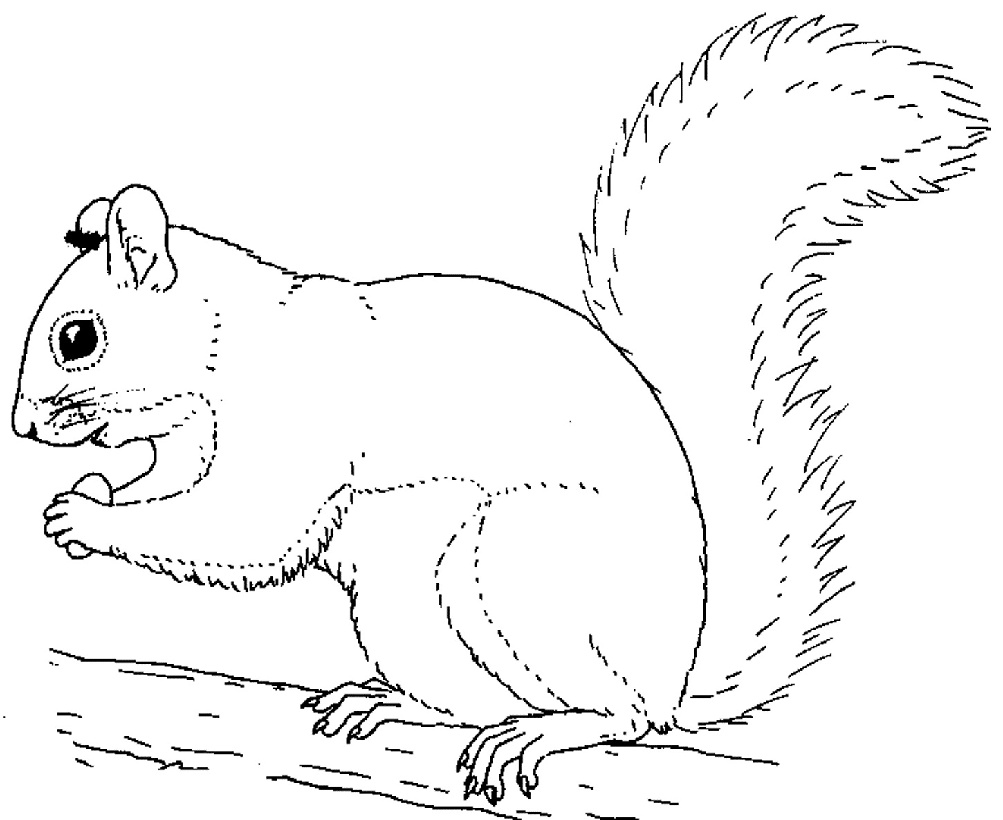 Drawn rodent child Squirrel Pages Printable Coloring