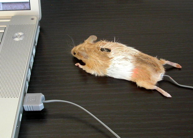 Drawn rodent computer mouse Mouse Mouse!: Steps Pictures) jpg