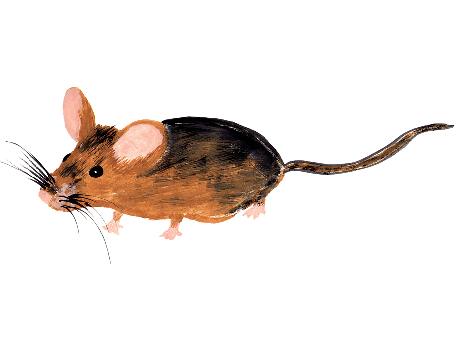 Drawn rodent computer mouse Drawing Isolated Handpainted Free Handpainted