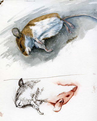 "Drawn rodent dead A Day ""To his Burns"