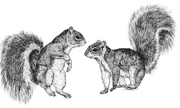 Drawn rodent dead Squirrel How chatting drawing each