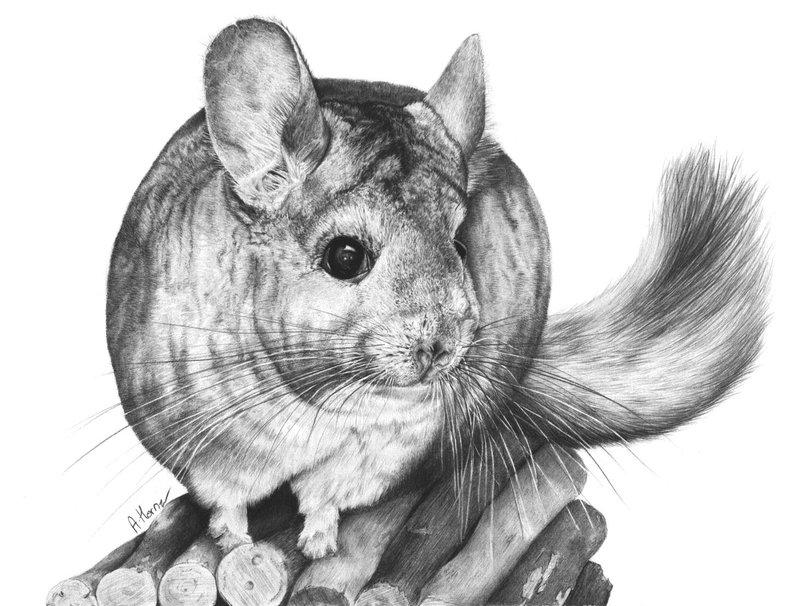 Drawn rodent deviantart @deviantART squanpie Beautiful deviantart deviantart