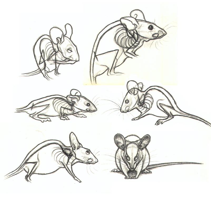 Drawn rodent deviantart Nikkiburr See on Through Through
