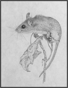 Drawn rodent field mouse Mouse Tattoo Mice and field