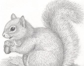 Drawn rodent gray Squirrel original acorn squirrel art