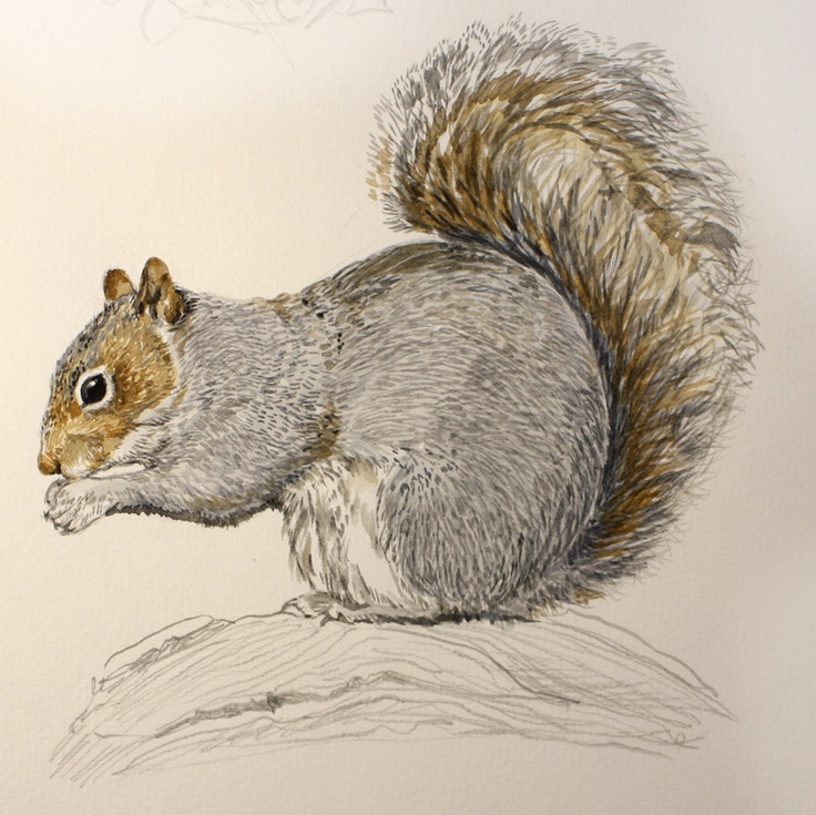 Drawn rodent gray Sketching squirrel ink art Eastern