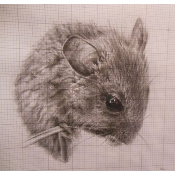 Drawn rodent illustration Google realistic Search mouse Artistic