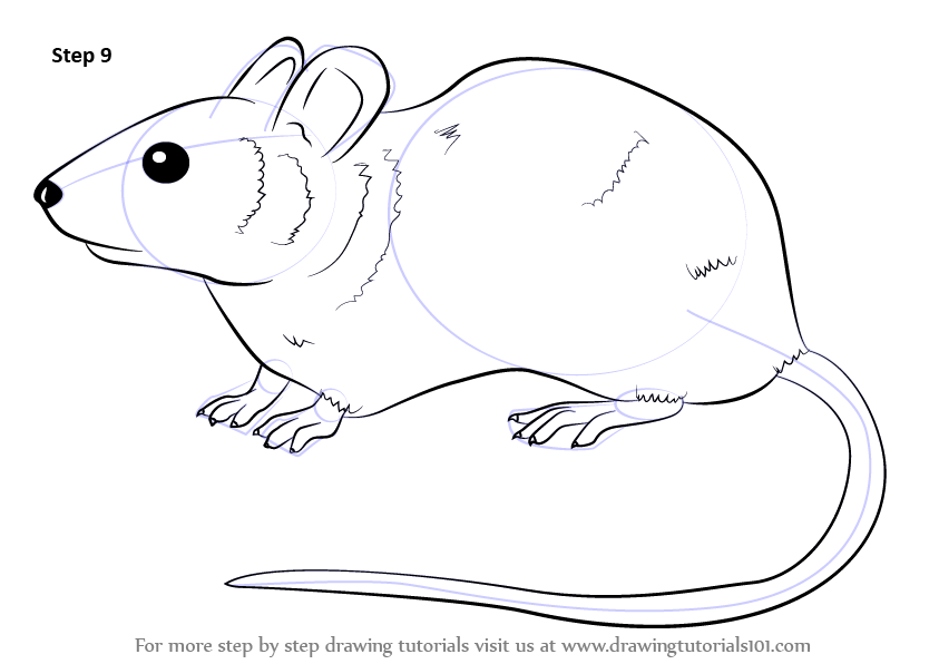 Drawn rodent line drawing How make Tutorials finish :