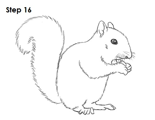 Drawn rodent line drawing Squirrel Squirrel Draw How to