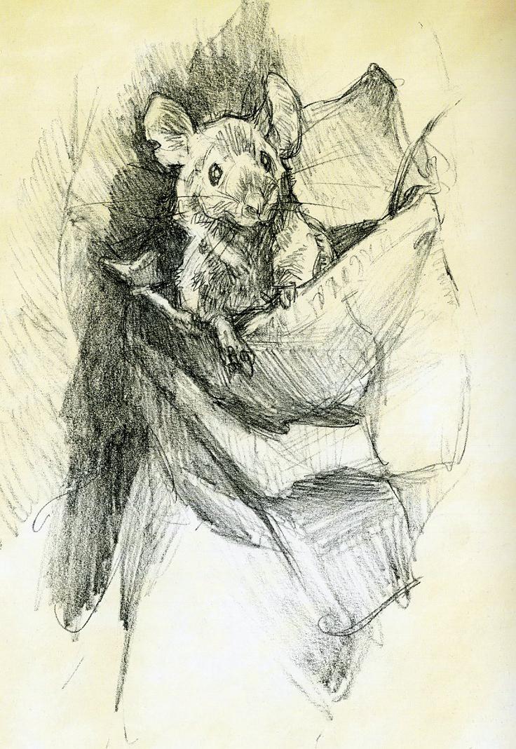 Drawn rodent little mouse Iain little The McCaig Art