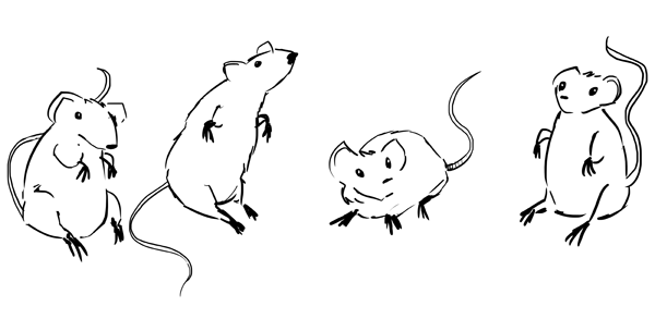 Drawn rodent little mouse — But ended little up