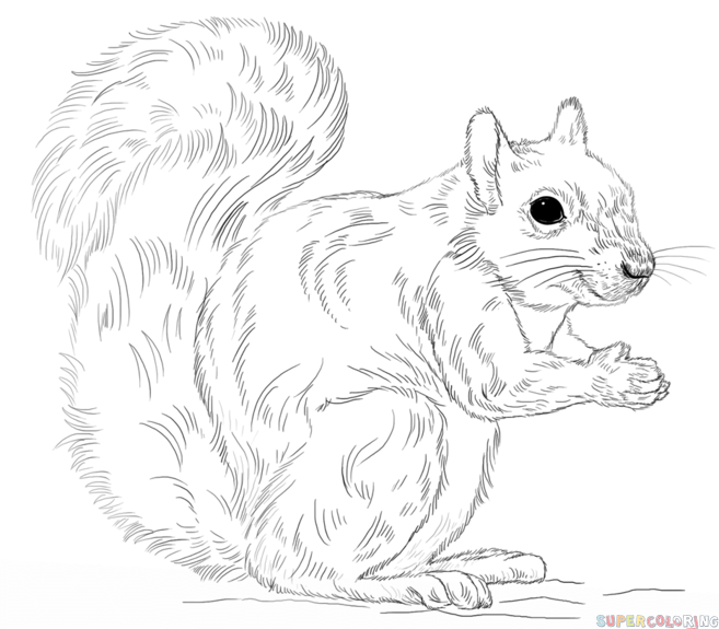 Drawn rodent mammal To draw an Drawing Squirrel