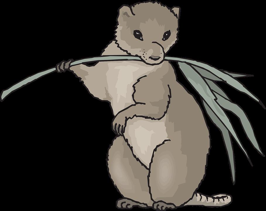 Drawn rodent mammal Photo Plant Standing Coypu Leaf