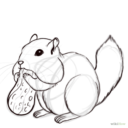 Drawn rodent mammal A and chipmunk Pictures) animals