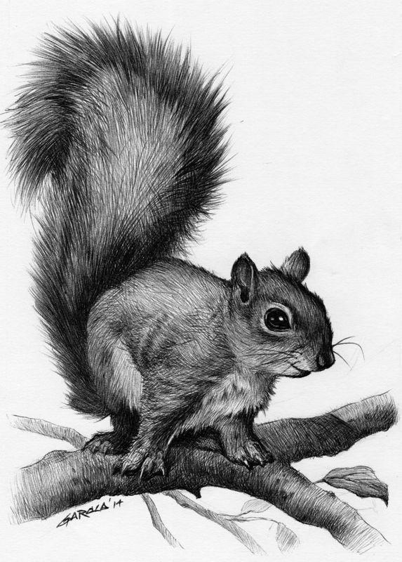 Drawn rodent mammal Tattoo about Squirrel ideas ideas