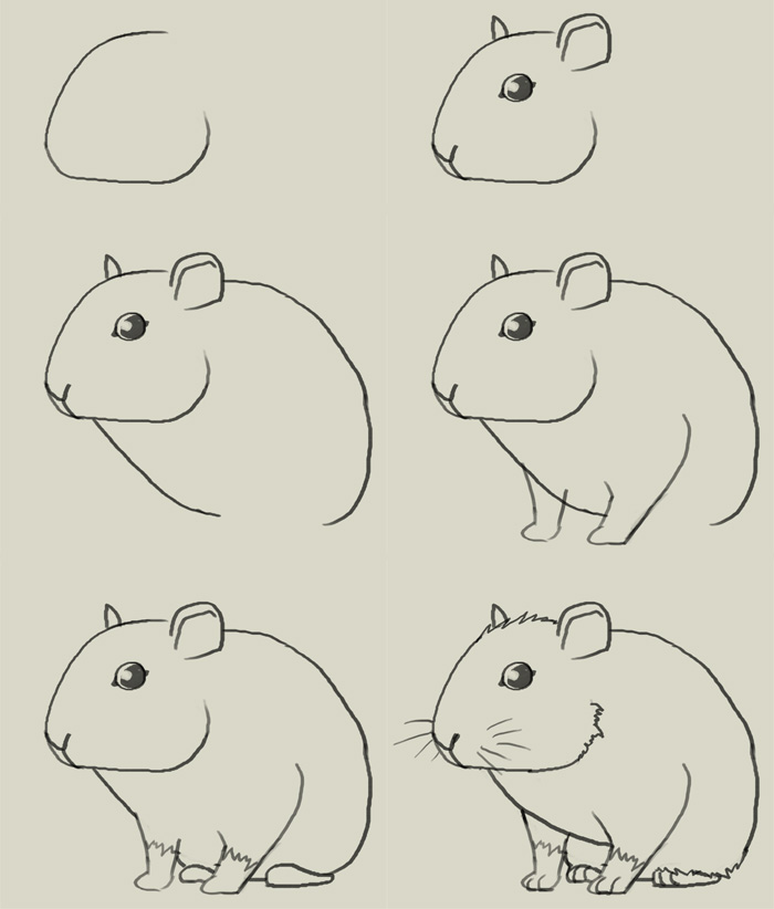 Drawn rodent mouse head To How draw a drawing