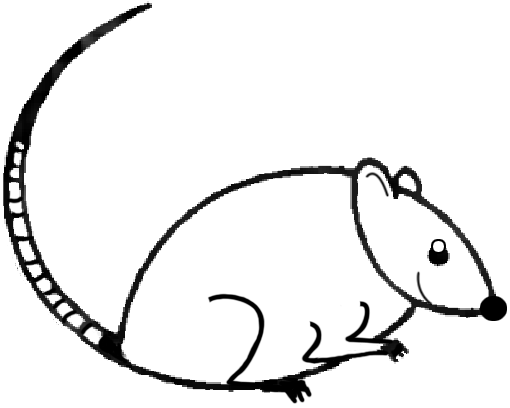 Drawn rodent mouse line Drawing by easy  How