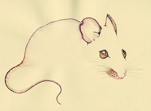 Drawn rodent mouse line Tail  ink pink ink