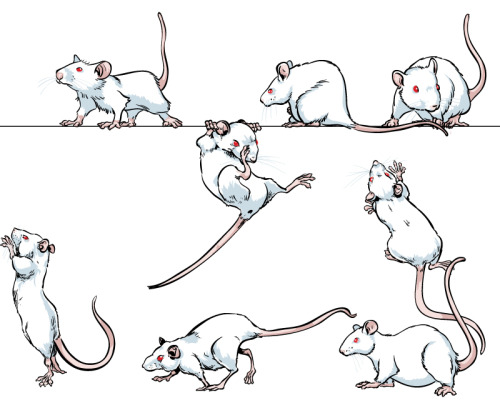 """Drawn rodent mouse line Medical years behind nationalpost: """"Lab"""
