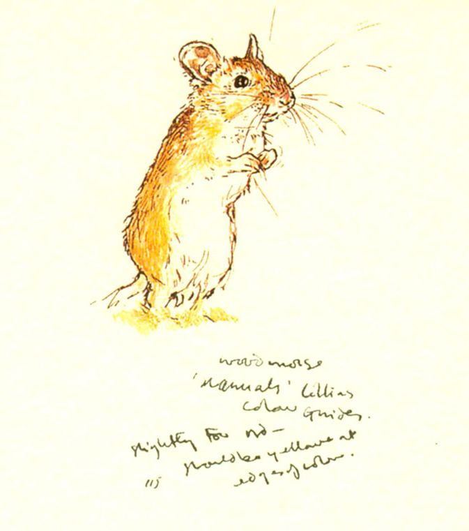 Drawn rodent paper Mice scrap Sketch Pinterest 214