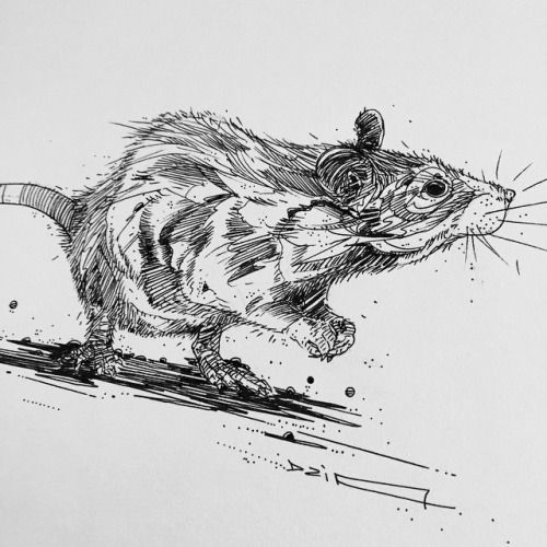 Drawn rodent paper On #dzia Uhh Graphic #