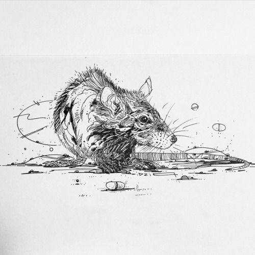 Drawn rodent paper Pinterest #lineart Sneaky images 428