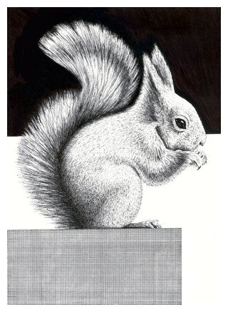 Drawn rodent pencil drawing Squirrel and How to Ink