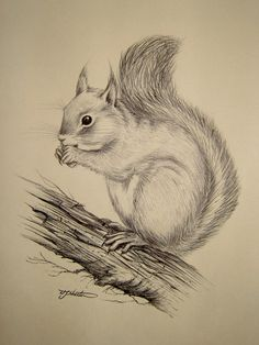Drawn rodent pencil drawing  anything of Signed Vintage