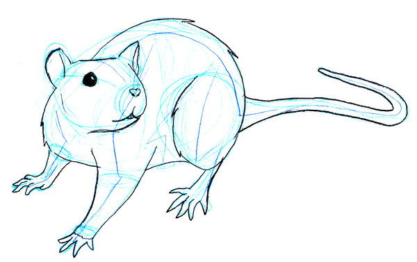 Drawn rodent rat Rats Pinterest Rats jpg Rats