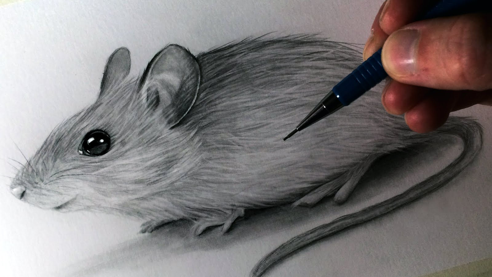 Drawn rodent realistic A Draw Mouse Mouse to