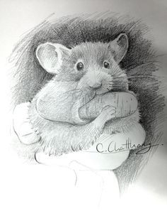 Drawn rodent realistic And A Drawings Draw Chattravadee
