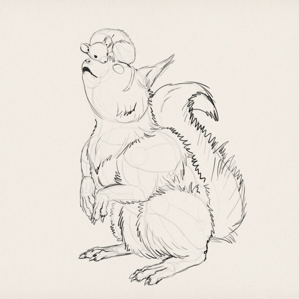 Drawn rodent sketch How squirrel Their a Anatomy