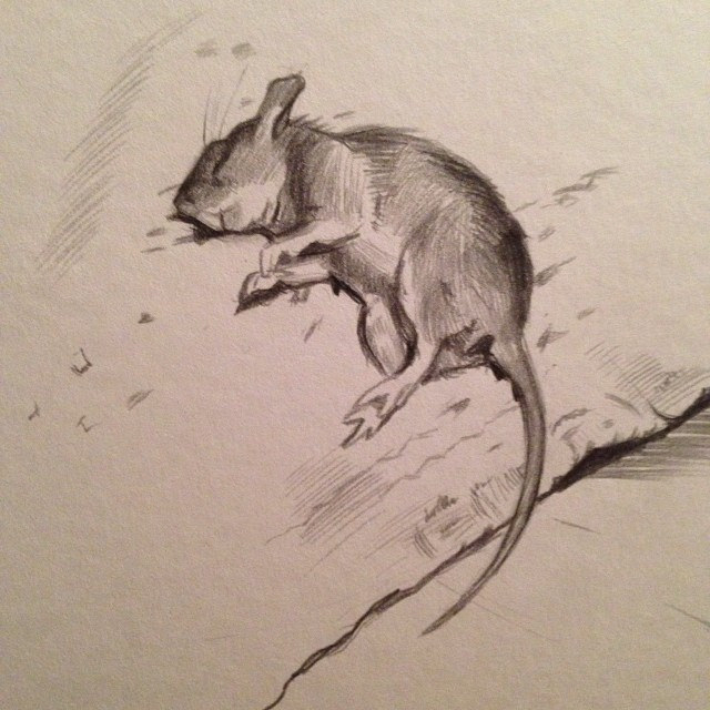 Drawn rodent sketch # #animal #rodent #mouse #d…
