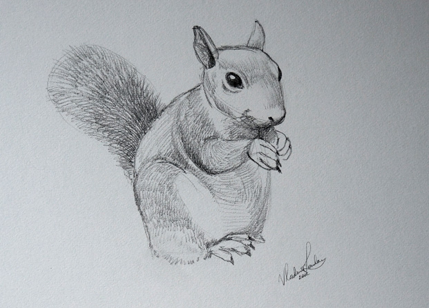 Drawn rodent sketch To an Drawing to Academy