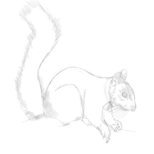 Drawn rodent sketch Sketch add Lesson forget