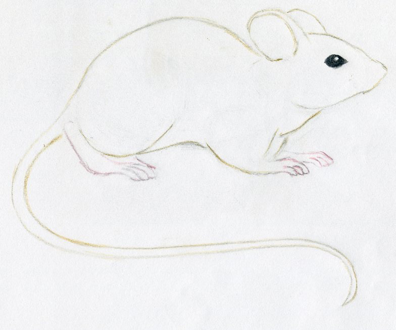 Drawn rodent sketch Draw Drawings Own Mouse How