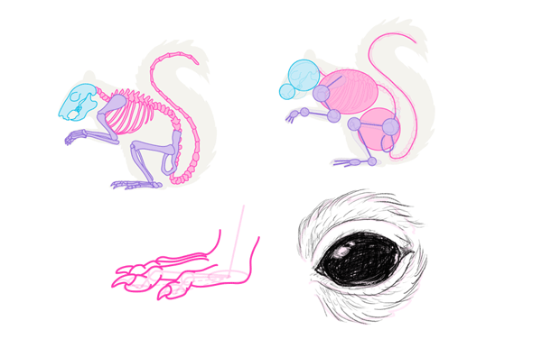 Drawn rodent small Rodents Big How Animals: and