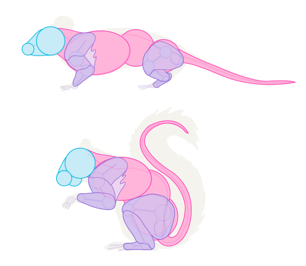 Drawn rodent small Small Animals: mouse Draw Rodents