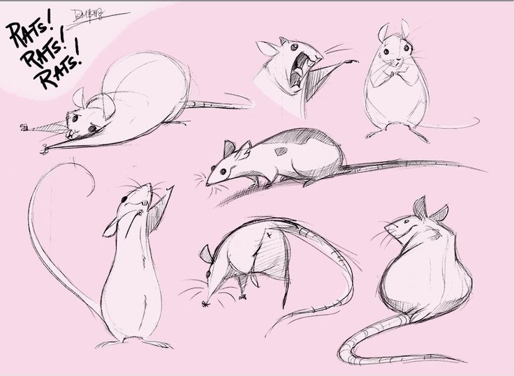 Drawn rodent squeaky Animals this Pinterest images Pin